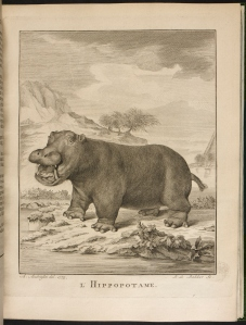 Image from British Library collection of a hippopotamus